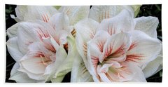 Amaryllis Cluster Beach Sheet
