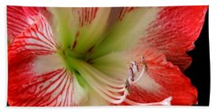 Amaryllis Beach Sheet