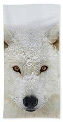 Arctic Wolf  Canis Lupus Arctos Beach Towel