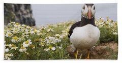 Atlantic Puffin In Breeding Plumage Beach Towel