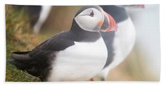 Atlantic Puffins Fratercula Arctica Beach Towel