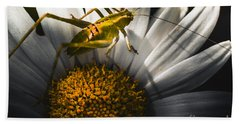 Australian Grasshopper On Flowers. Spring Concept Beach Towel by Jorgo Photography - Wall Art Gallery
