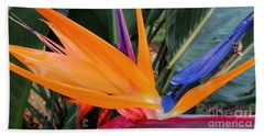 Bird Of Paradise Beach Towel by Kristine Merc