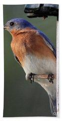 Bluebird Beach Sheet by Douglas Stucky