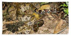 Boa Constrictor Beach Towel by Gregory G. Dimijian, M.D.