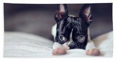 Boston Terrier Puppy Beach Towel by Nailia Schwarz