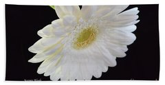 Beach Towel featuring the photograph Bright White Gerber Daisy # 2 by Jeannie Rhode
