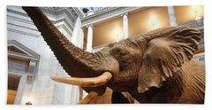Bull Elephant In Natural History Rotunda Beach Sheet