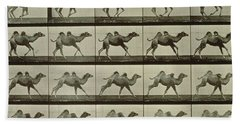 Camel Beach Towel by Eadweard Muybridge