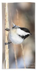Beach Towel featuring the photograph Black Capped Cutie by Heather King