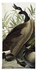 Canada Goose Beach Towel by John James Audubon