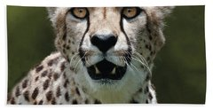 Cheetah Portrait Beach Sheet