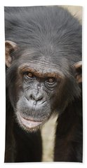 Chimpanzee Portrait Ol Pejeta Beach Towel