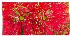 Closeup Blossoms Of Nz Christmas Tree Pohutukawa Beach Towel