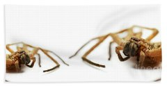 David And Goliath Daddy Longlegs Beach Sheet by Jorgo Photography - Wall Art Gallery