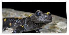 Fire Salamander Salamandra Salamandra Beach Towel