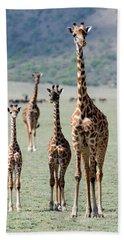 Giraffes Giraffa Camelopardalis Beach Towel