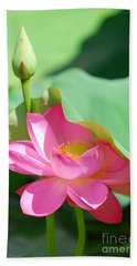 D48l-96 Water Lily At Goodale Park Photo Beach Sheet