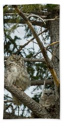 Great Horned Owls Beach Sheet