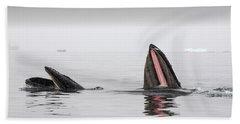 Humpback Whales Megaptera Novaeangliae Beach Towel
