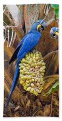 Hyacinth Macaws Anodorhynchus Beach Towel