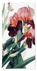 Watercolor Of A Pink And Maroon Tall Bearded Iris I Call Iris La Forza Del Destino Beach Towel