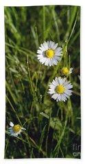 Little White Daisies Beach Sheet by Cindy Garber Iverson