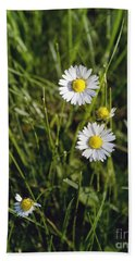 Little White Daisies Beach Towel