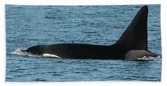 Beach Sheet featuring the photograph Male Orca Killer Whale In Monterey Bay California 2013 by California Views Mr Pat Hathaway Archives
