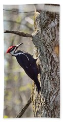Male Pileated Woodpecker Beach Towel by David Porteus