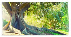 Morton Bay Fig Tree Beach Towel