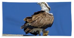 Osprey With Fish In Talons Beach Sheet by Dale Powell