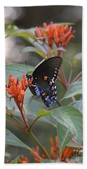 Beach Towel featuring the photograph Pipevine Swallowtail II by Carol  Bradley