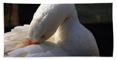 Beach Towel featuring the photograph Preening Goose by Jeremy Hayden