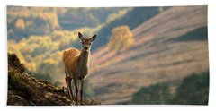 Red Deer Calf Beach Towel