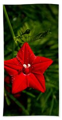 Scarlet Morning Glory Beach Towel by Ramabhadran Thirupattur