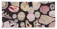 Shells By C . 1.3 Beach Sheet