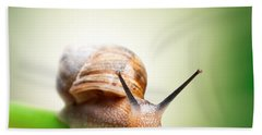 Snail On Green Stem Beach Towel