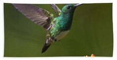 Beach Towel featuring the photograph Snowy-bellied Hummingbird by Heiko Koehrer-Wagner