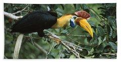 Sulawesi Red-knobbed Hornbill Male Beach Towel by Mark Jones
