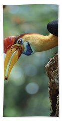 Sulawesi Red-knobbed Hornbill Male Beach Towel
