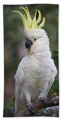 Sulphur-crested Cockatoo Displaying Beach Towel