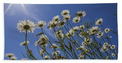 Sun Lit Daisies Beach Sheet