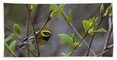 Townsends Warbler Beach Towel