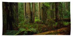 Trees In A Forest, Hoh Rainforest Beach Towel