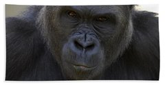 Western Lowland Gorilla Portrait Beach Towel