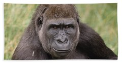 Western Lowland Gorilla Young Male Beach Sheet by Gerry Ellis