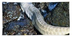 White Moray Eel Beach Towel by Lehua Pekelo-Stearns