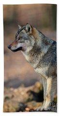Wolf In Germany Beach Towel