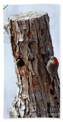 Woodpecker And Starling Fight For Nest Beach Towel